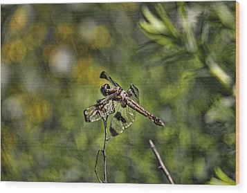 Dragonfly Wood Print by Daniel Sheldon