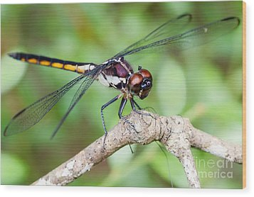 Dragonfly Wood Print by Dawna  Moore Photography