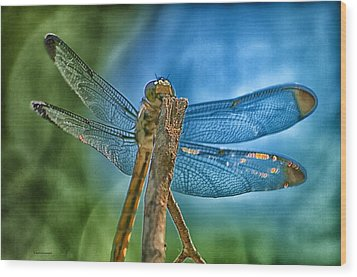 Wood Print featuring the photograph Dragonfly by Dennis Baswell