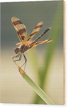 Dragonfly Dreams Wood Print