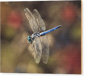 Dragonfly Floating Wood Print