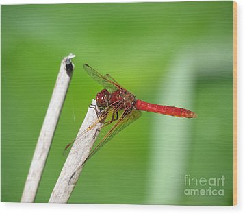 Dragonfly Wood Print by Gayle Swigart