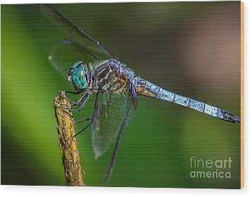 Dragonfly Having Summer Fun Wood Print