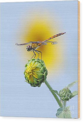 Dragonfly In Sunflowers Wood Print