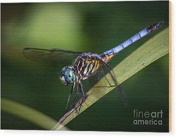Dragonfly In The Wind Wood Print