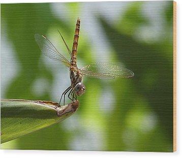Dragonfly Wood Print by Janina  Suuronen