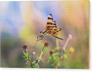 Dragonfly Wood Print by Jonathan Gewirtz