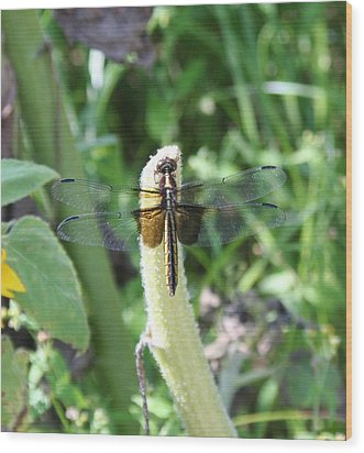 Wood Print featuring the photograph Dragonfly by Karen Silvestri