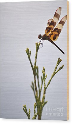 Dragonfly Lands Wood Print by Affini Woodley