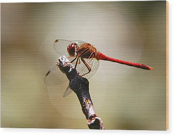 Dragonfly Light Wood Print by Christina Rollo