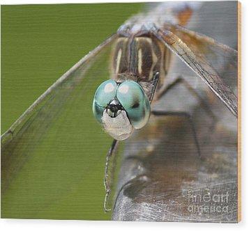Dragonfly Macro Wood Print
