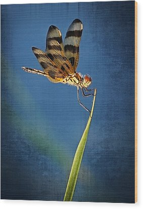 Wood Print featuring the photograph Dragonfly On Blue by Dawn Currie