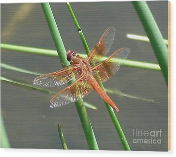 Wood Print featuring the photograph Dragonfly Orange by Kerri Mortenson