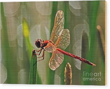 Dragonfly Profile Wood Print by Larry Nieland