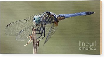 Dragonfly Smile Wood Print by Lilliana Mendez