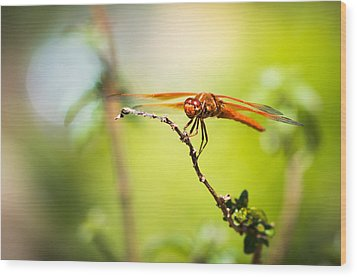 Dragonfly Smile Wood Print by Priya Ghose