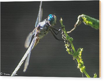 Dragonfly Taking A Rest  Wood Print by Steven  Taylor