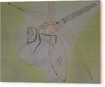 Dragonfly Visitor Wood Print by Marcia Weller-Wenbert