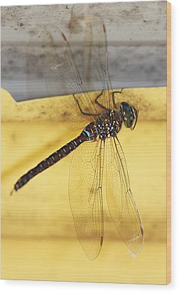 Wood Print featuring the photograph Dragonfly Web by Melanie Lankford Photography