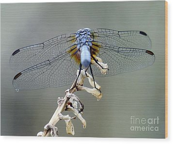 Dragonfly Wing Details II Wood Print by Lilliana Mendez