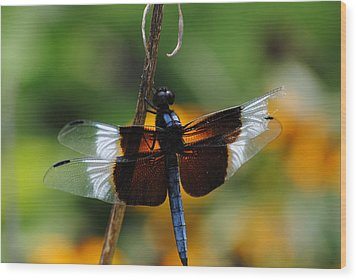 Wood Print featuring the photograph Dragonfly Zoom by Robert  Moss