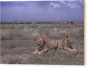 Wood Print featuring the photograph Drama On The Serengeti by Gary Hall