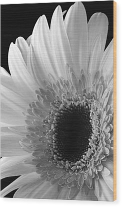 Wood Print featuring the photograph Dramatic Beauty by Dawn Currie