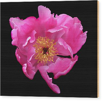Dramatic Hot Pink Peony Flower Wood Print by Jennie Marie Schell