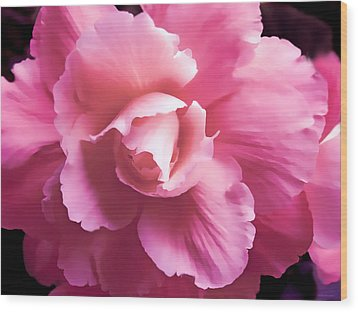 Dramatic Pink Begonia Floral Wood Print by Jennie Marie Schell