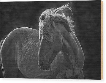 Dramatic Wild Mustang Wood Print by Bob Decker