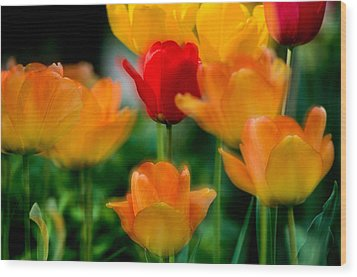 Dream Tulips Wood Print