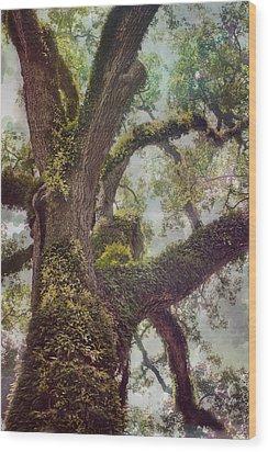 Dreamer's Oak Wood Print