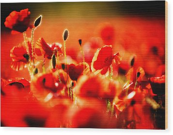 Dreaming Of Poppies Wood Print by Meirion Matthias