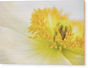 Dreaming Poppy Wood Print by Angela Doelling AD DESIGN Photo and PhotoArt