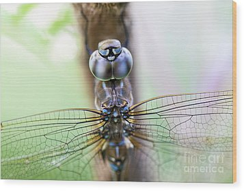 Dreaming With A Dragonfly Wood Print by Scotts Scapes