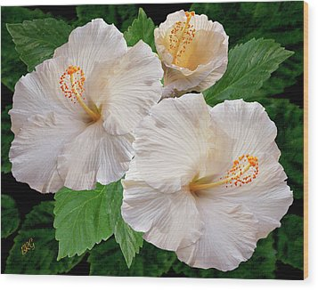 Dreamy Blooms - White Hibiscus Wood Print