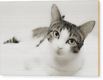 Dreamy Cat 2 Wood Print by Andee Design