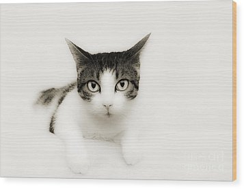 Dreamy Cat Wood Print by Andee Design