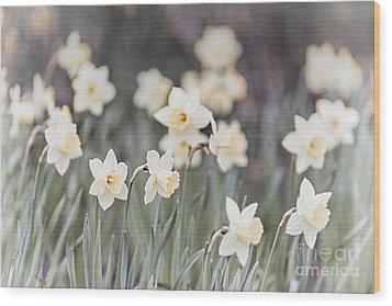 Dreamy Daffodils Wood Print by Elena Elisseeva