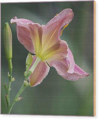 Dreamy Daylily Wood Print by Patti Deters