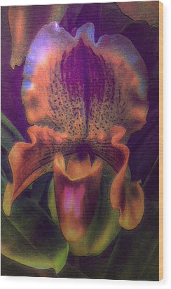 Dreamy Orchid Wood Print by Jill Balsam