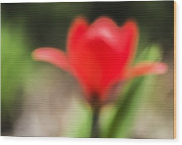 Dreamy Red Tulip Wood Print