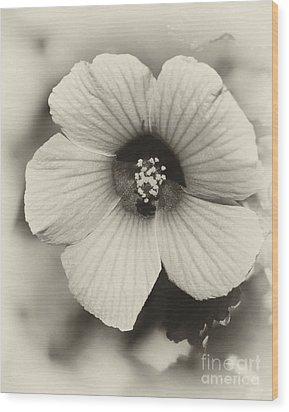 Dreamy Sepiatone Rosette Hibiscus Wood Print by Sabrina L Ryan