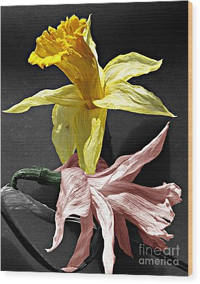 Wood Print featuring the photograph Dried Daffodils by Nina Silver