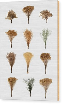 Dried Flowers Collection Wood Print by Olivier Le Queinec