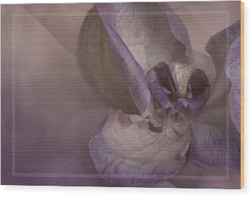 Dried Orchid Wood Print by Cindy Rubin