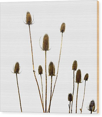 Dried Thistle Wood Print by Bernard Jaubert