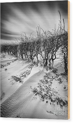Drifting Wood Print by John Farnan