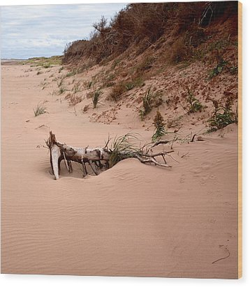 Wood Print featuring the photograph Driftwood Along Dalvay Shore by Trever Miller