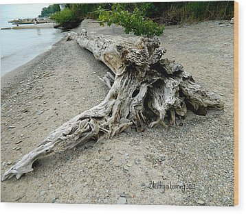 Driftwood At Lake Erie Wood Print by Kathy Barney